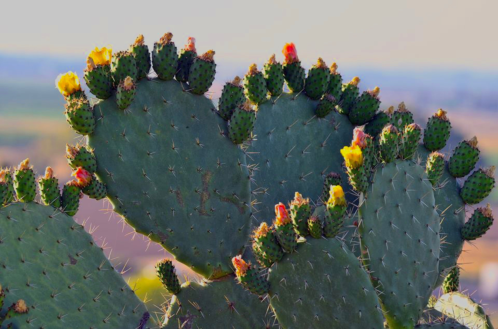 cactus-3211828_19203